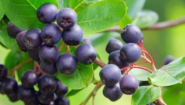 Acai Eating Plan To Get Detoxification